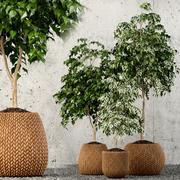 Colección de plantas 62 modelo 3d