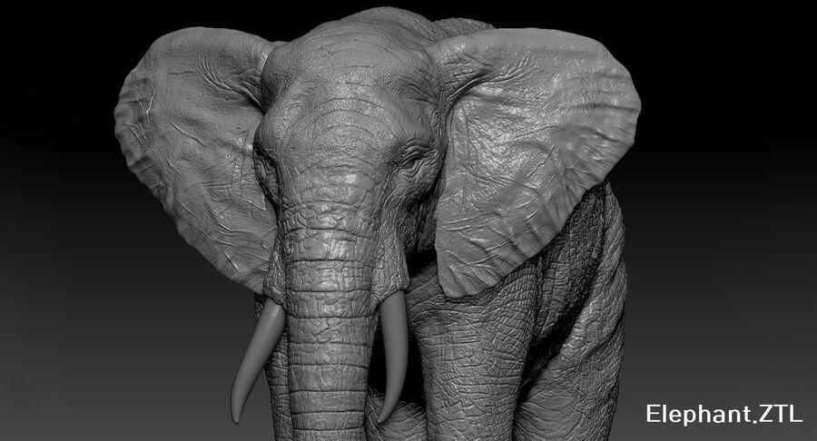 Éléphant (gréé) royalty-free 3d model - Preview no. 33