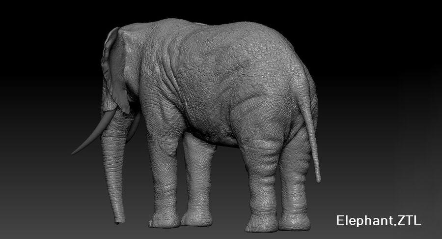 Éléphant (gréé) royalty-free 3d model - Preview no. 34