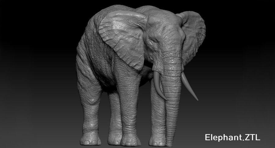 Éléphant (gréé) royalty-free 3d model - Preview no. 35