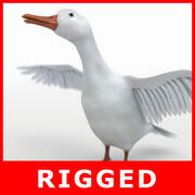 White Duck (Rigged) 3d model