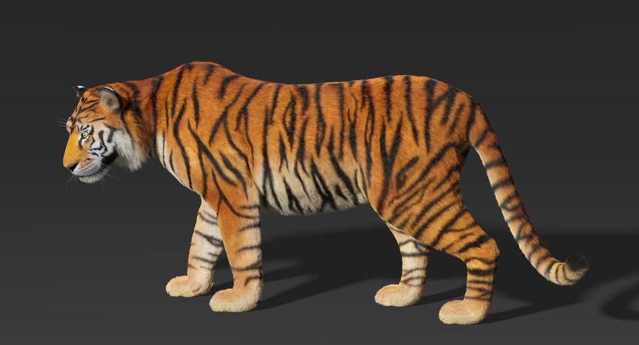 Animado de tigre (pele) royalty-free 3d model - Preview no. 6