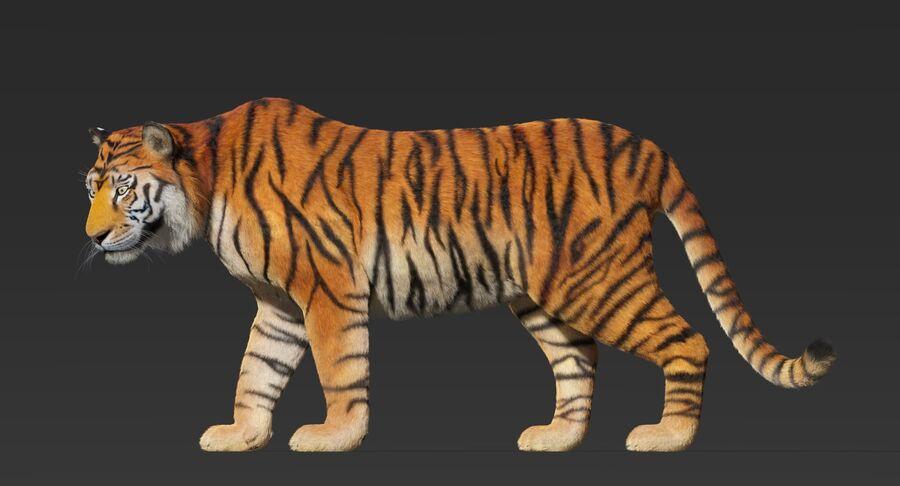Animado de tigre (pele) royalty-free 3d model - Preview no. 8