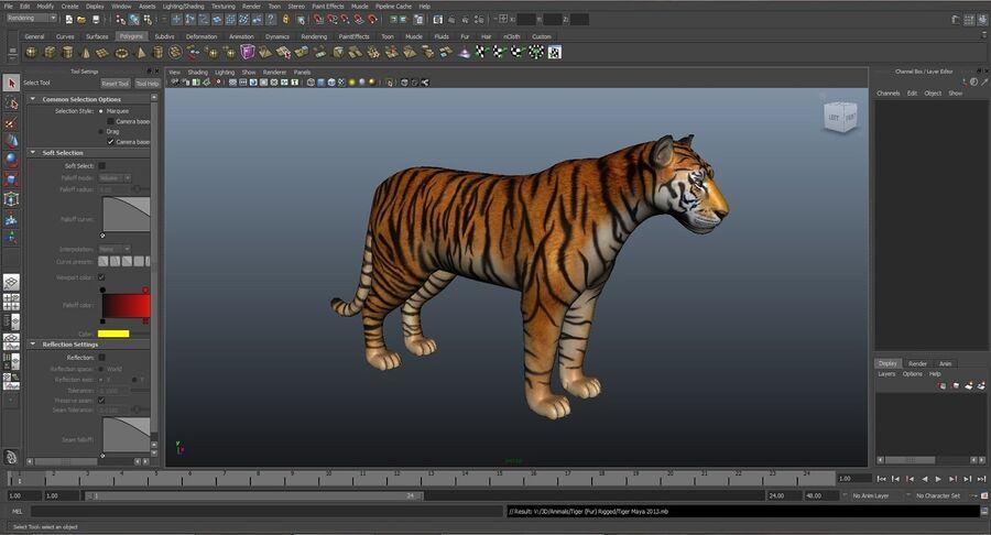 Animado de tigre (pele) royalty-free 3d model - Preview no. 12