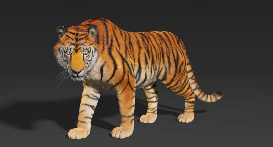 Animado de tigre (pele) royalty-free 3d model - Preview no. 4