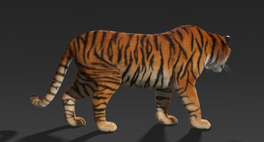 Animado de tigre (pele) royalty-free 3d model - Preview no. 5