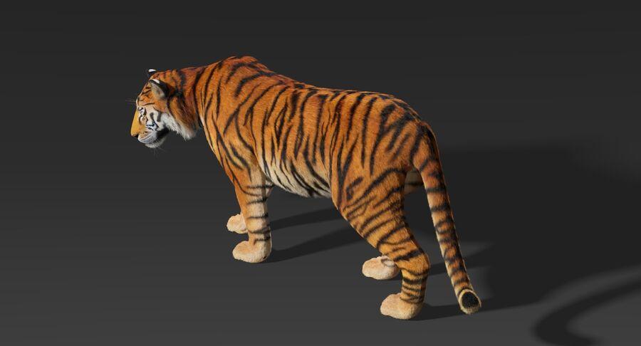 Animado de tigre (pele) royalty-free 3d model - Preview no. 7