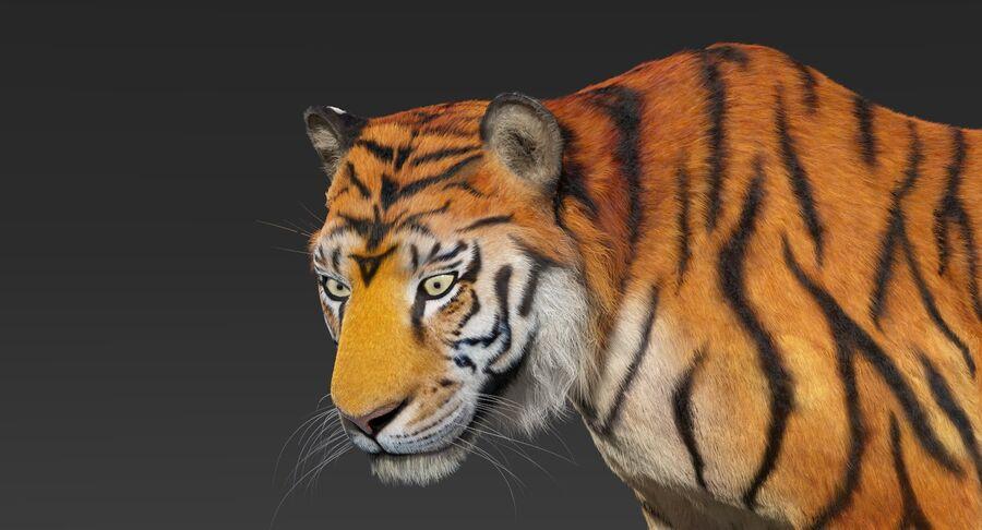 Animado de tigre (pele) royalty-free 3d model - Preview no. 9