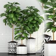 Raccolta di piante 63 3d model
