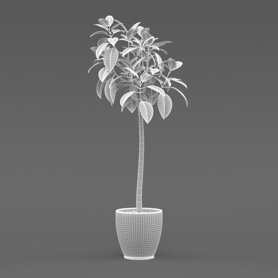 Rubber Tree Plant royalty-free 3d model - Preview no. 5