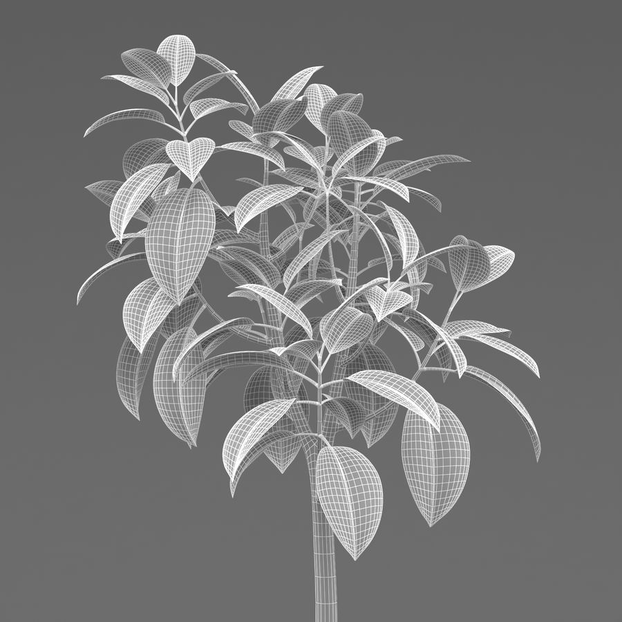 Rubber Tree Plant royalty-free 3d model - Preview no. 6