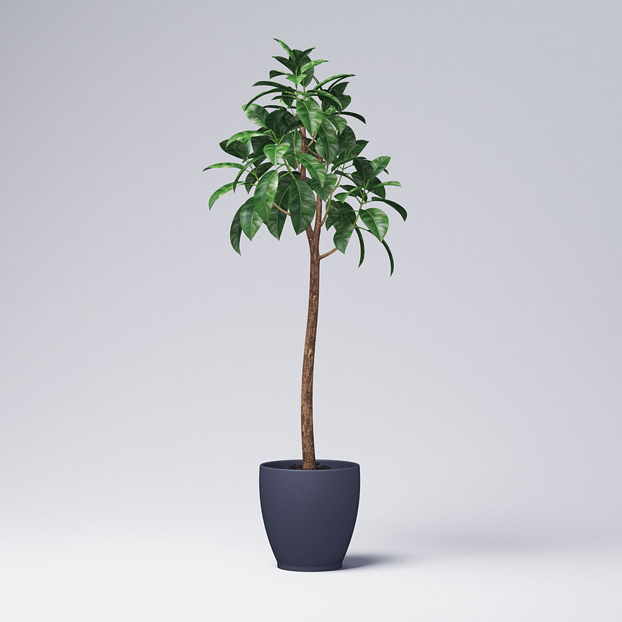 Rubber Tree Plant royalty-free 3d model - Preview no. 3