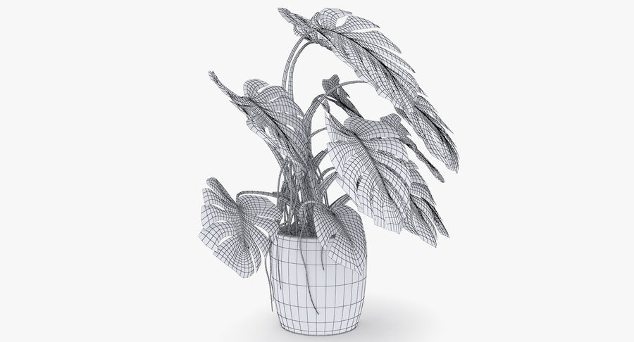 Monstera Deliciosa Plant In Pot royalty-free 3d model - Preview no. 32
