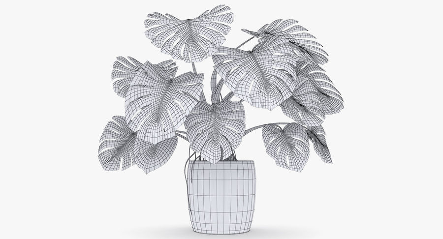 Monstera Deliciosa Plant In Pot royalty-free 3d model - Preview no. 25
