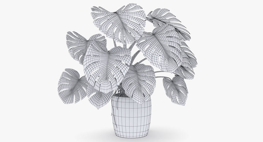 Monstera Deliciosa Plant In Pot royalty-free 3d model - Preview no. 11