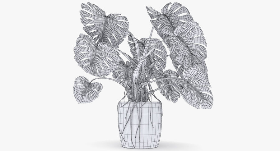 Monstera Deliciosa Plant In Pot royalty-free 3d model - Preview no. 34