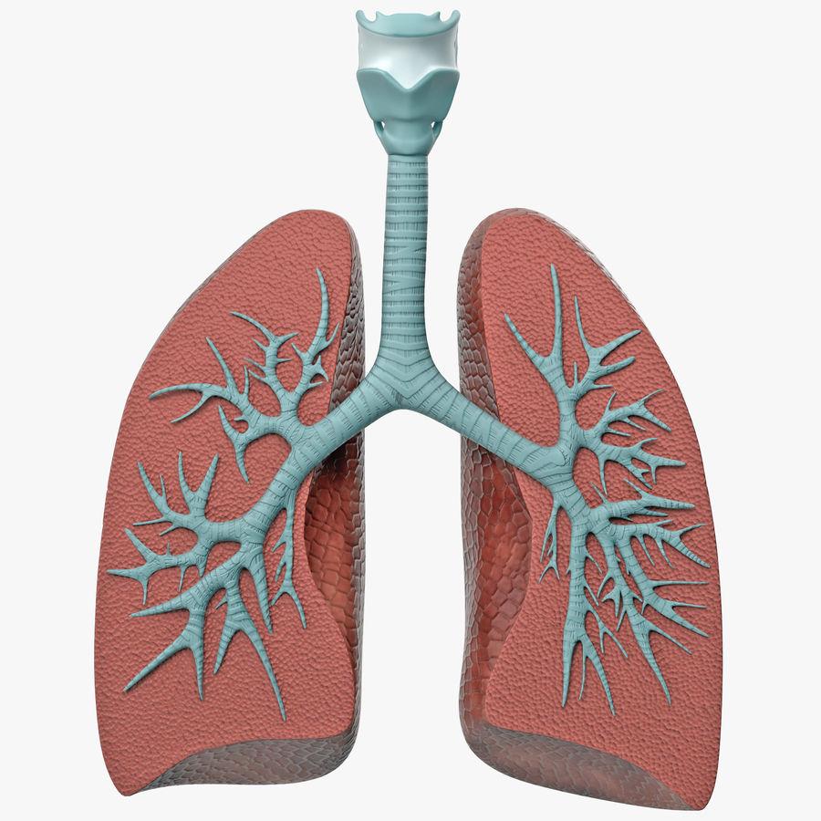 Lung Anatomy Dissection Model 3d Model 49 X Obj Fbx C4d