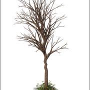 Winter Tree V2 3d model
