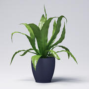 Asplenium Plant 3d model
