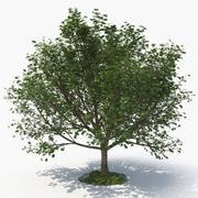 arbre D 3d model