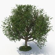 träd E 3d model