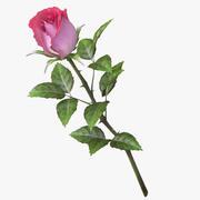 rose_v9_red-розовый 3d model