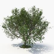 Tree H 3d model