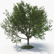 Tree F 3d model