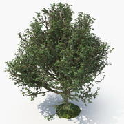 Tree G 3d model