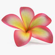 Plumeria Fleur Exotique 3d model