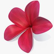 Plumeria Fiore rosso Lei 3d model