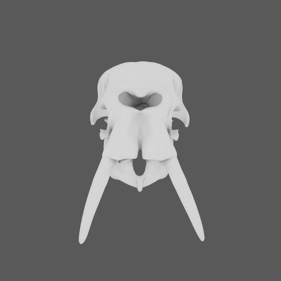 African Elephant Skull royalty-free 3d model - Preview no. 22