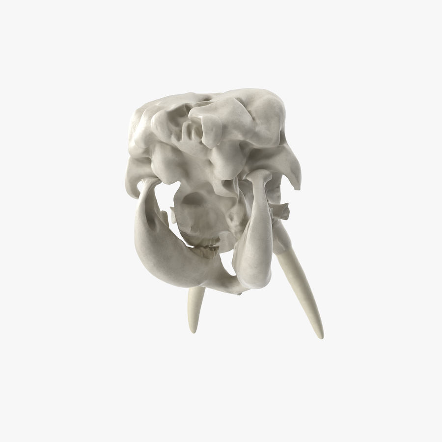 African Elephant Skull royalty-free 3d model - Preview no. 14