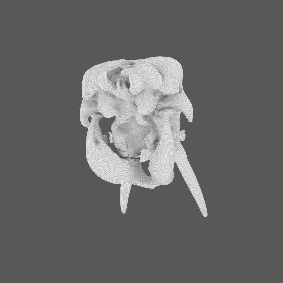 African Elephant Skull royalty-free 3d model - Preview no. 31