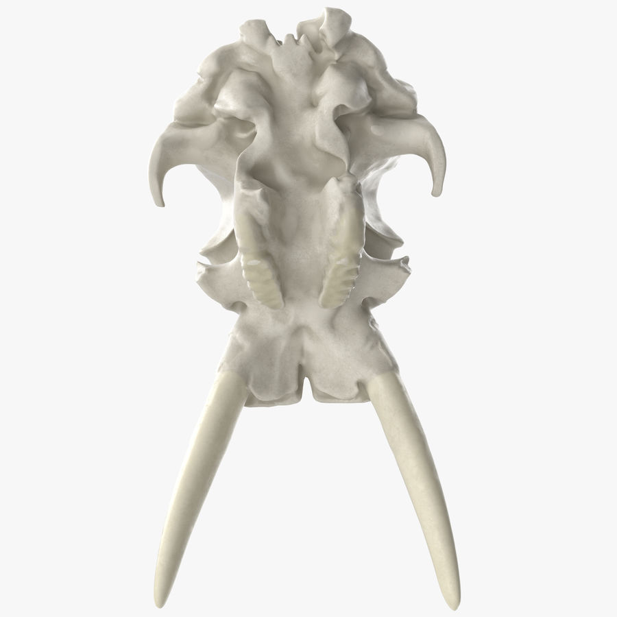 African Elephant Skull royalty-free 3d model - Preview no. 12
