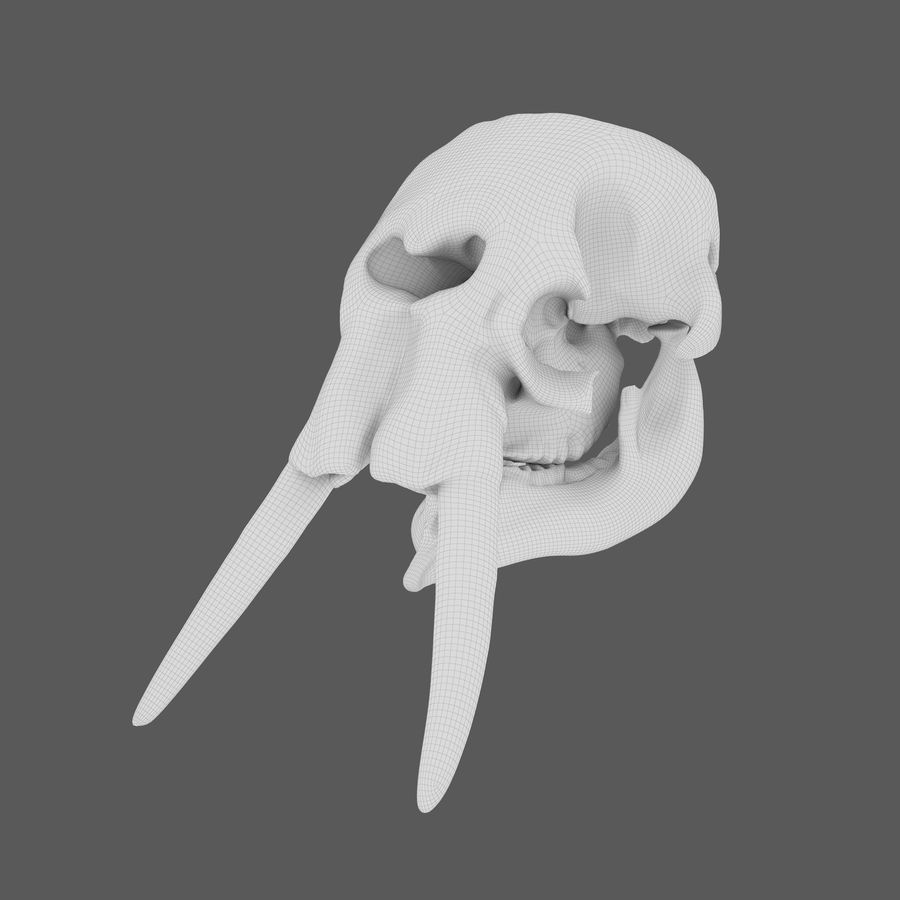 African Elephant Skull royalty-free 3d model - Preview no. 20