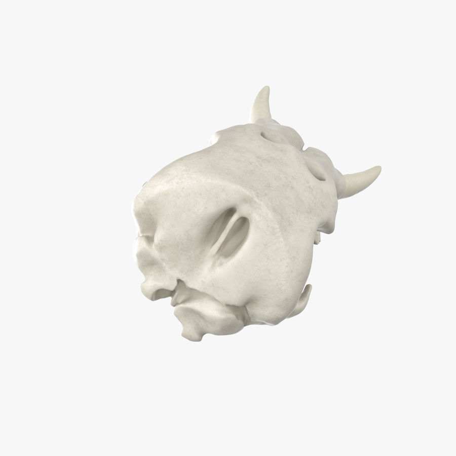 African Elephant Skull royalty-free 3d model - Preview no. 17