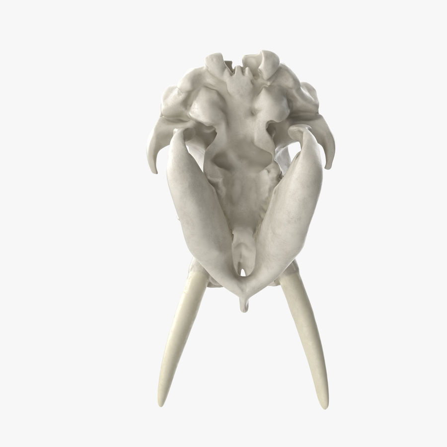 African Elephant Skull royalty-free 3d model - Preview no. 9