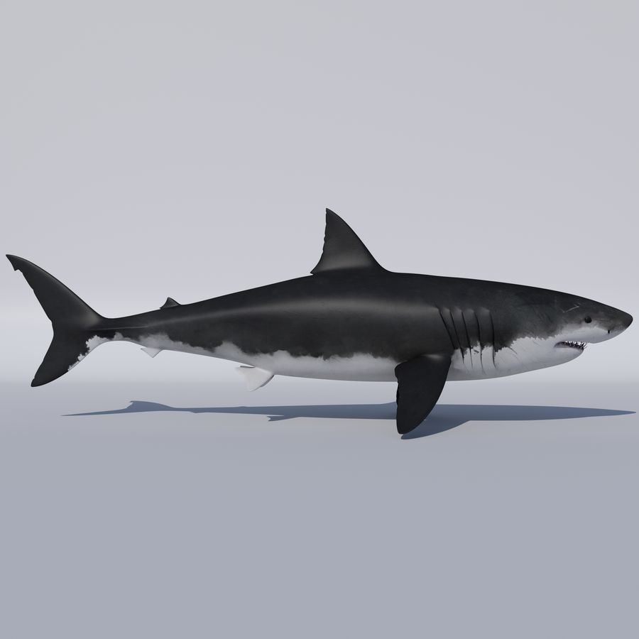 Great White Shark royalty-free 3d model - Preview no. 5