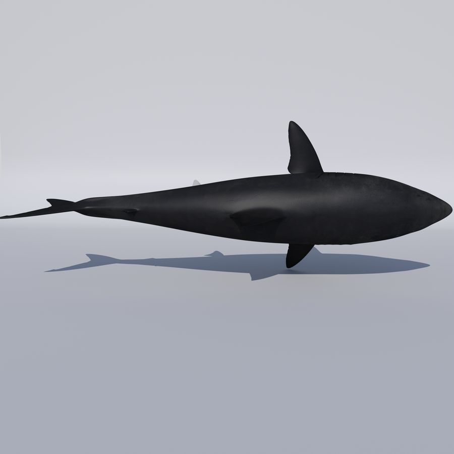Great White Shark royalty-free 3d model - Preview no. 8