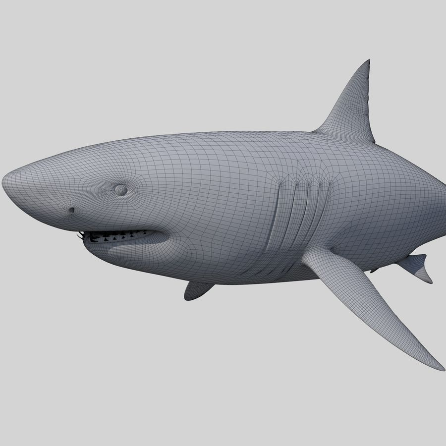 Great White Shark royalty-free 3d model - Preview no. 3