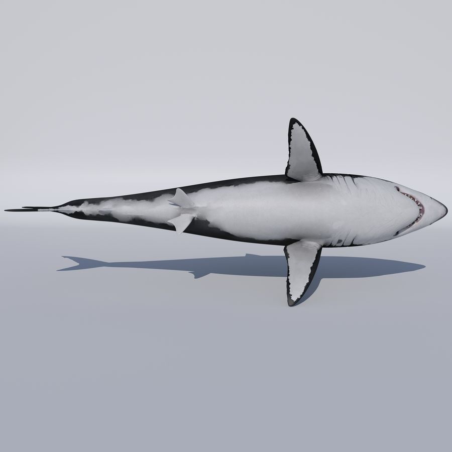 Great White Shark royalty-free 3d model - Preview no. 7