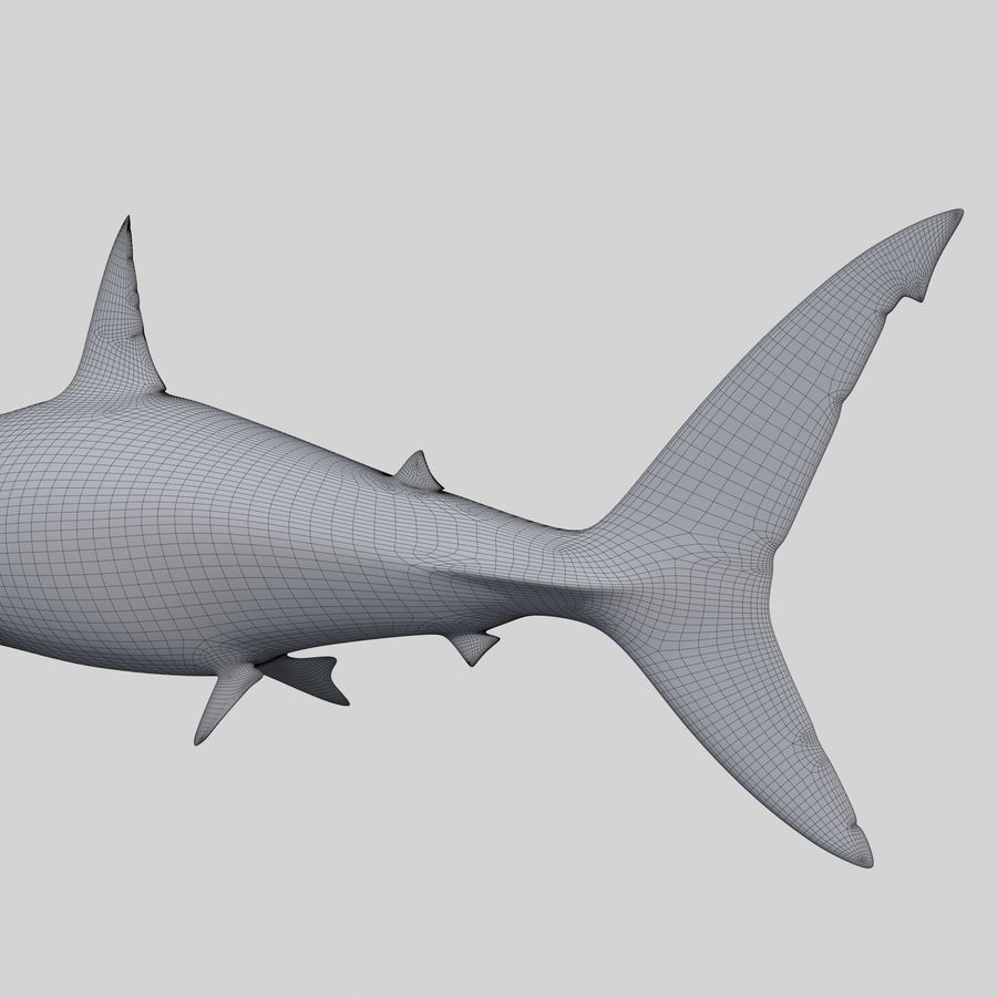 Great White Shark royalty-free 3d model - Preview no. 9