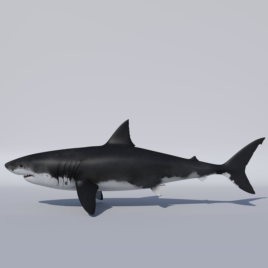 Great White Shark royalty-free 3d model - Preview no. 1