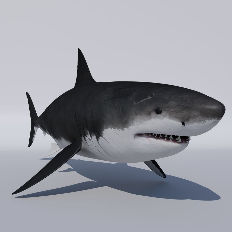 Great White Shark royalty-free 3d model - Preview no. 4