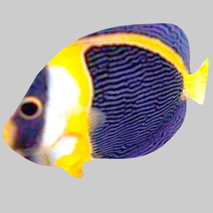 Aquarium Fish Collection Low Poly royalty-free 3d model - Preview no. 33