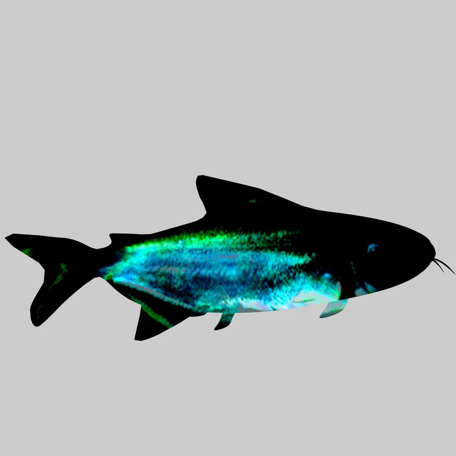 Aquarium Fish Collection Low Poly royalty-free 3d model - Preview no. 9