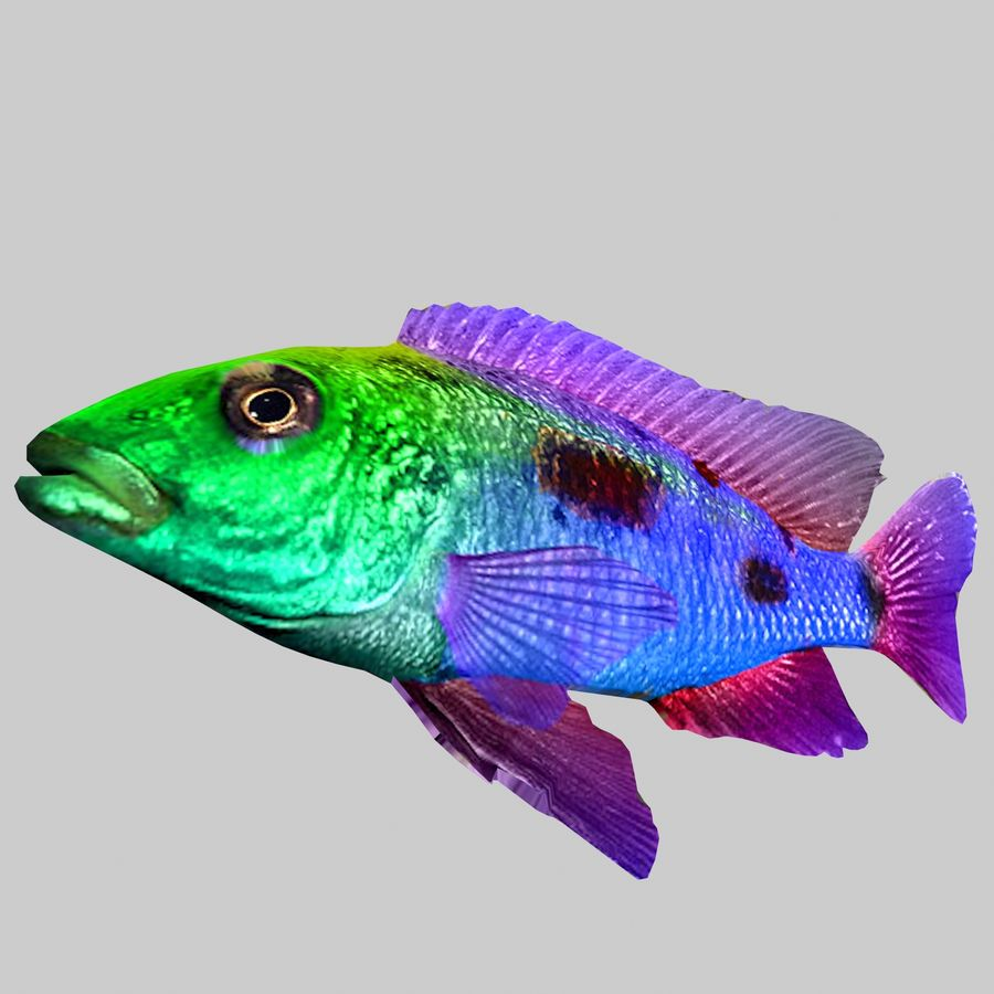 Aquarium Fish Collection Low Poly royalty-free 3d model - Preview no. 37