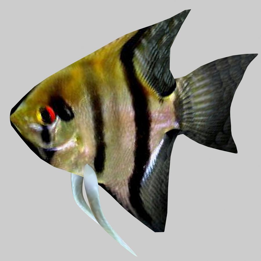 Aquarium Fish Collection Low Poly royalty-free 3d model - Preview no. 16