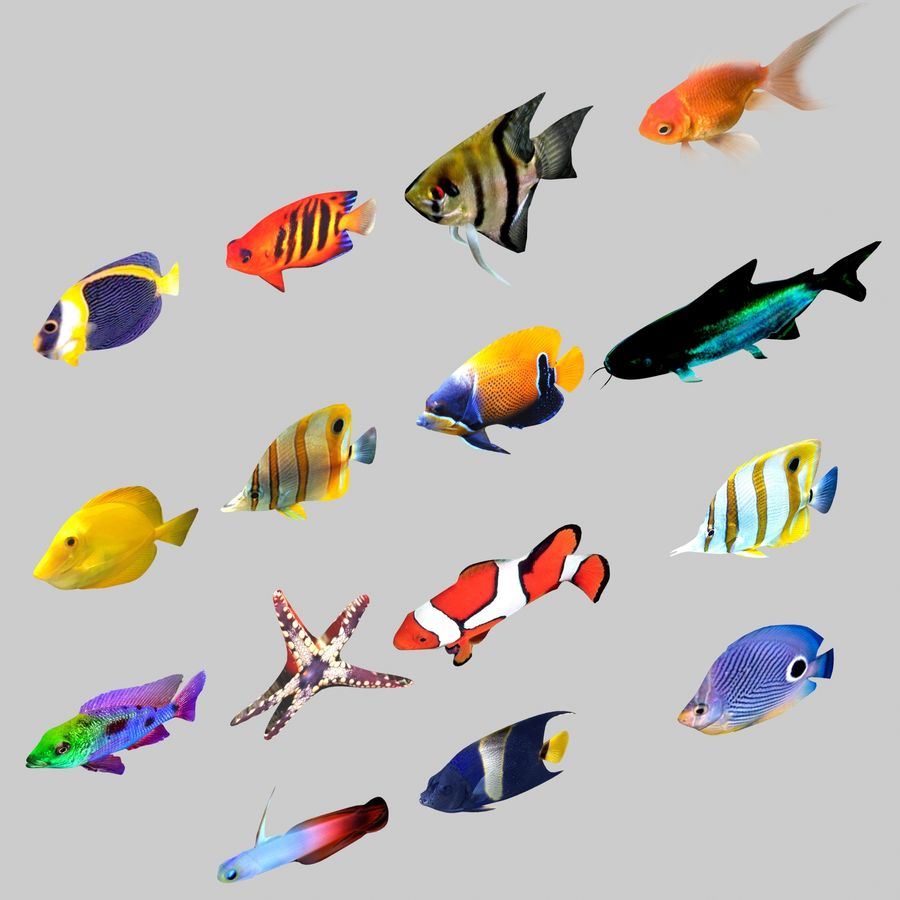 Aquarium Fish Collection Low Poly royalty-free 3d model - Preview no. 5